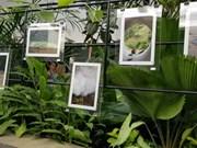 """L'exposition """"Trois points - Ellipsis"""" à Hô Chi Minh-Ville"""