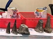 Saisie de cornes de rhinos à l'aéroport de Tan Son Nhat