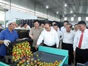 Le PM visite un modèle de production agricole de haute technologie à Lâm Dông