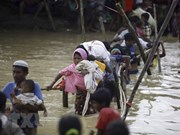 Myanmar-Bangladesh : rapatriement rapide des réfugiés rohingyas