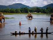 Les experts prennent la défense de l'éléphant au Vietnam