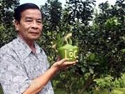 Dans le delta du Mékong, des fruits stylisés pour le Têt