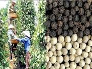 Le Vietnam invite l'Inde à reprendre certaines importations agricoles vietnamiennes