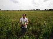 Face à la sécheresse, le delta du Mékong entre en résistance
