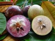 La pomme étoilée fraîche du Vietnam s'exporte aux États-Unis