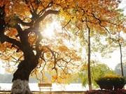 La diversité des arbres de Hanoï