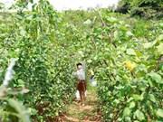 Un peu d'agrotourisme à Môc Châu
