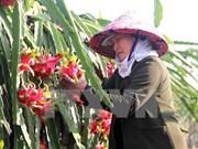 La Chine intensifie l'importation de produits agricoles du Vietnam