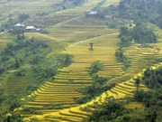Le tourisme durable prend de l'altitude à Hoàng Su Phi