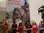 Les éléphants des Hauts Plateaux du Centre stars d'une exposition à Hanoi
