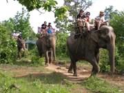 L'éco-bénévolat au secours des animaux sauvages à Dak Lak