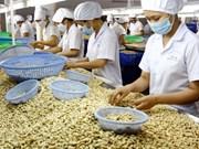 Le Vietnam exporte 3,52 milliards de dollars de noix de cajou