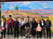 Lao Cai et Da Nang accueillent les premiers touristes étrangers de l'année du Chien