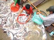 Les droits antidumping américains sur le panga vietnamien font des vagues