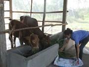 La pauvreté cède du terrain chez les Khmers à Soc Trang