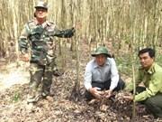 Kiên Giang renforce la prévention des incendies de forêt en saison sèche