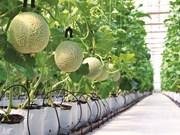 À Hô Chi Minh-Ville, une décharge transformée en jardin hi-tech