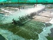 Israël cherche un partenariat pour importer les crevettes de Bac Lieu