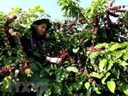 La caféiculture vietnamienne en quête de marques fortes