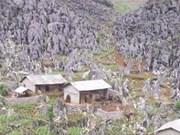 Les forêts revivent sur la montagne Dong Van