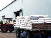Riz : Exportations record en 2010