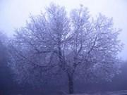 Météo : le froid devrait persister jusqu'au 20 janvier