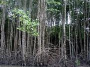Le VN organisera la réunion sur la gestion durable des forêts