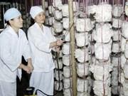 """Programme """"Mission champignons"""" à Quang Tri"""