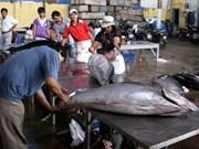 Vietnam - Japon : coopération dans le commerce du thon rouge