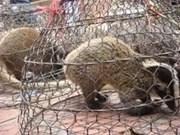 Vietnam et Cambodge luttent contre le trafic d'animaux