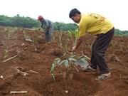 Le GMD investit dans la culture de l'hévéa au Cambodge