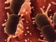Intensification des mesures pour empêcher l'épidémie d'E.coli