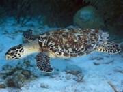 Douze tortues marines relâchées en mer