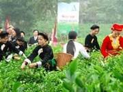 Ouverture du Festival international du thé à Thai Nguyên