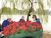 Têt traditionnel du Dragon : un festival des fleurs s'ouvrira fin décembre prochain