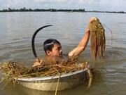 Crues : aides pour 11 villes et provinces du delta du Mékong