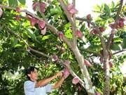 Développement durable du cacaotier au Vietnam