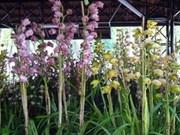 Pour un développement durable de la floricuture de Da Lat