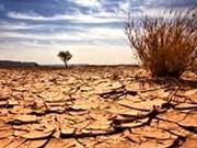 ONU: lutter davantage contre la désertification