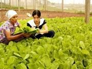 L'AFA aide le Vietnam dans le développement de l'agriculture organique