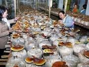 Réunion sur l'économie nationale à Quang Tri