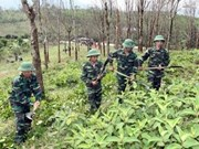 Vietnam et USA coopèrent dans le règlement des séquelles de la guerre
