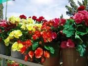 Les fleurs de Dà Lat envoûtent le marché mondial