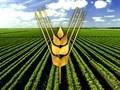 Sécurité alimentaire: la FAO s'engage à aider le Vietnam
