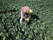Agriculture: zone expérimentale de coopération Chine-ASEAN