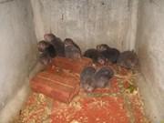 73 animaux sauvages ont retrouvé la forêt de Dà Lat