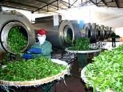 Hausse des exportations nationales de thé