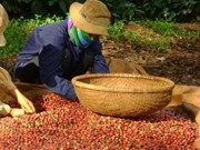 Le commerce bilatéral Vietnam - Indonésie maintient sa croissance