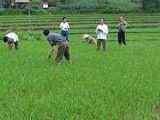 Vietnam et OMC discutent des marchés non agricoles
