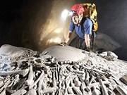 Découverte d'un squelette fossilisé de tigre à Quang Binh